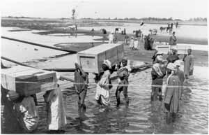 Tutankhamun Archive photograph ii.6.28