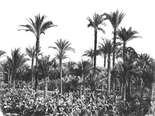 Hammerschmidt, W., Egyptian countryside (1857-9