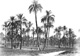 Click to see details of a palm grove.
