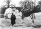 Click to see details of a boy and a camel.