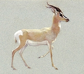 Howard Carter's watercolours from the Griffith Institute Archive